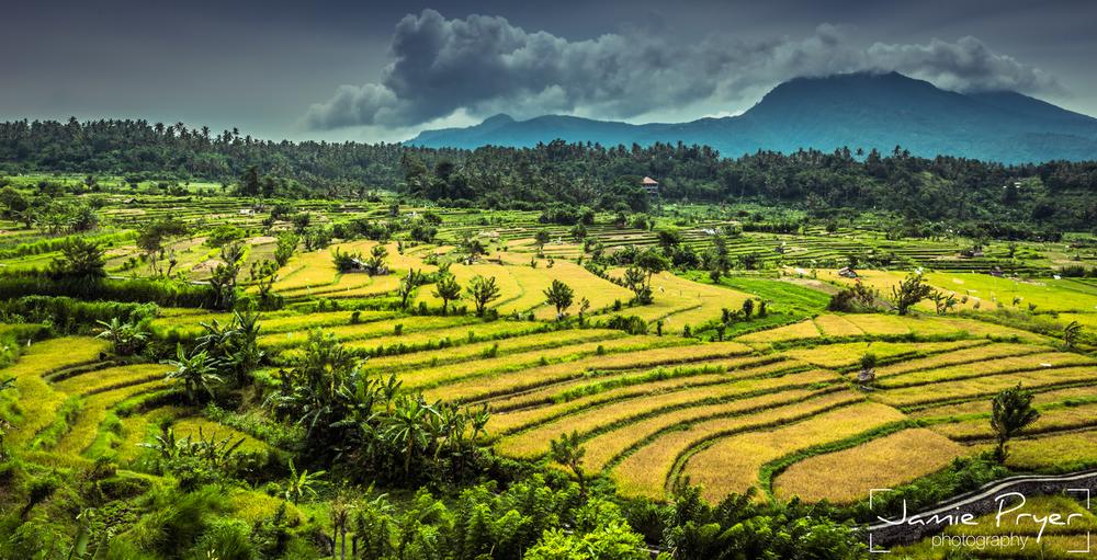 Bali Rice Fields-2.jpg