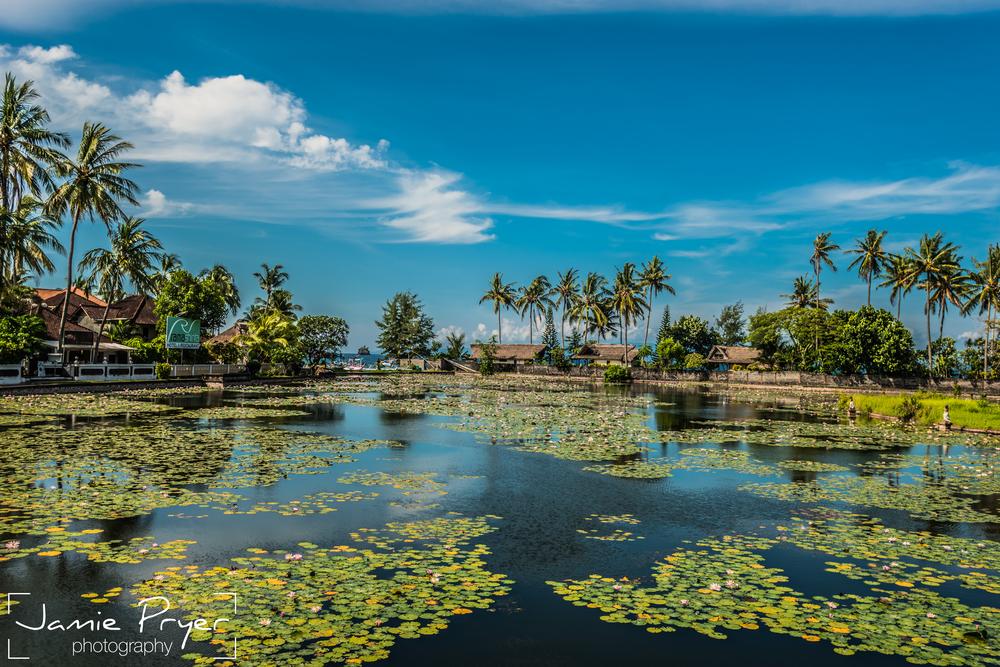 Pond Lillies.jpg