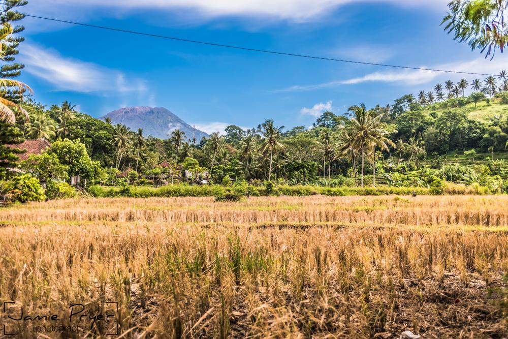 Bali Landscape.jpg