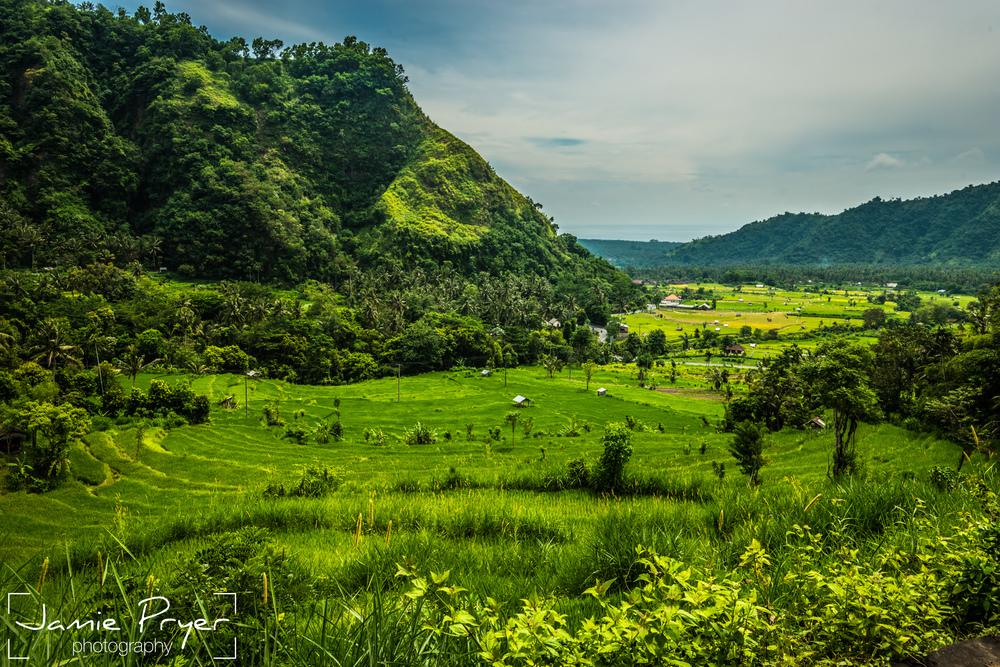Bali Rice Fields2.jpg