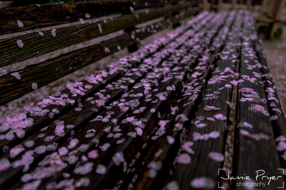 Blossum Bench-2.jpg