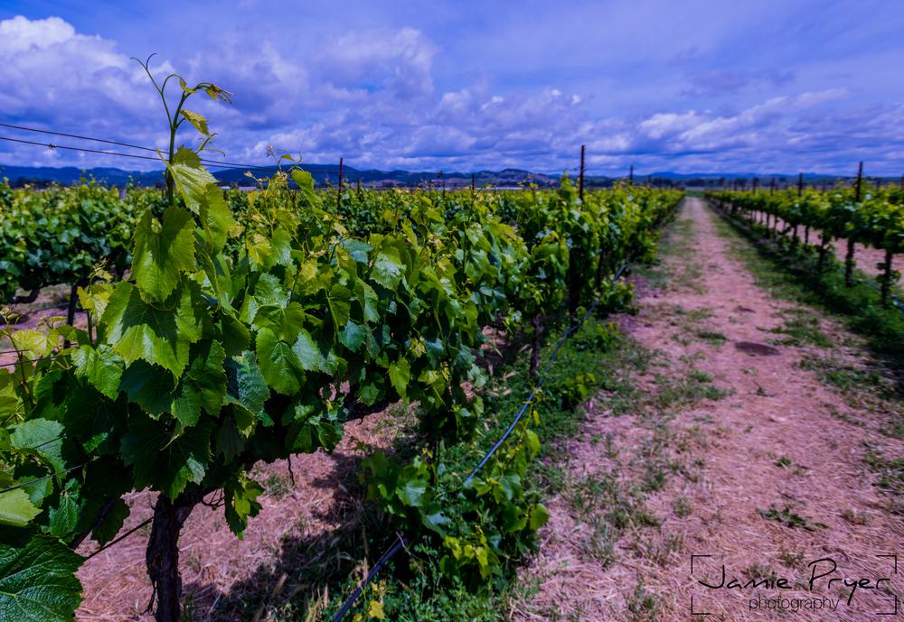 Wine Views-2.jpg