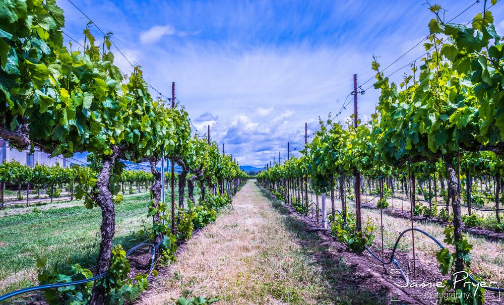Growing Wine-2.jpg