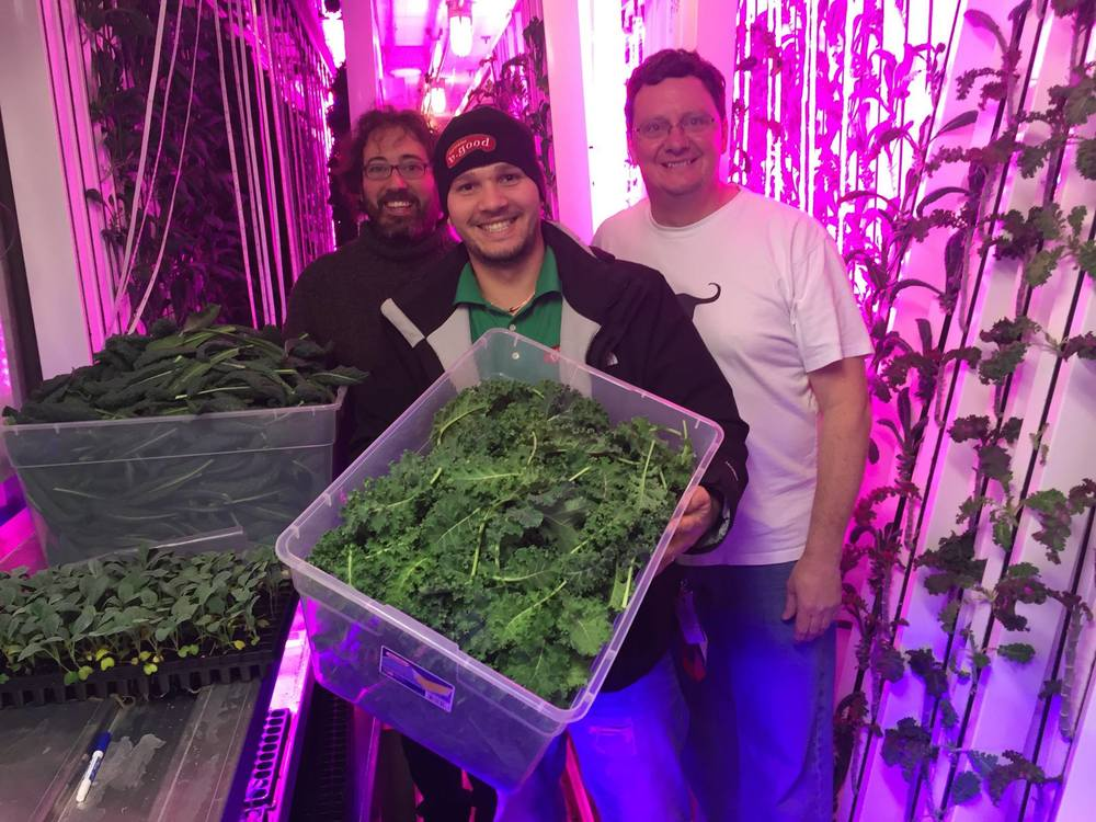 The General Manager of a local b.good restaurant came to DeLuca Farms to help harvest some of the kale grown in the LGM.
