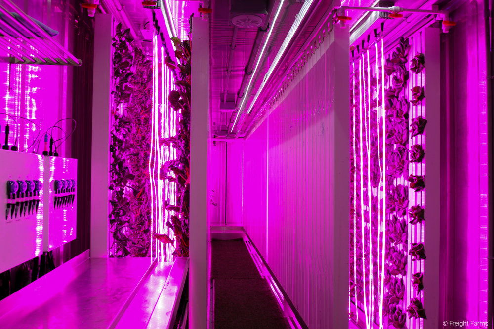 The red and blue LEDs produce a purple glow inside the Leafy Green Machine.
