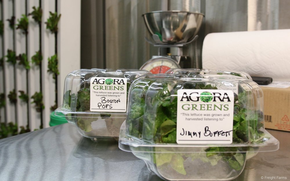 Freshly harvested and packaged produce from Agora Greens