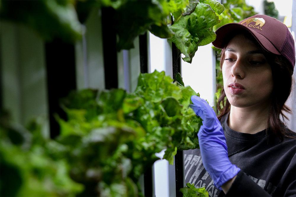 Freight Farms_Boston_Interior_Student_Harvesting_1