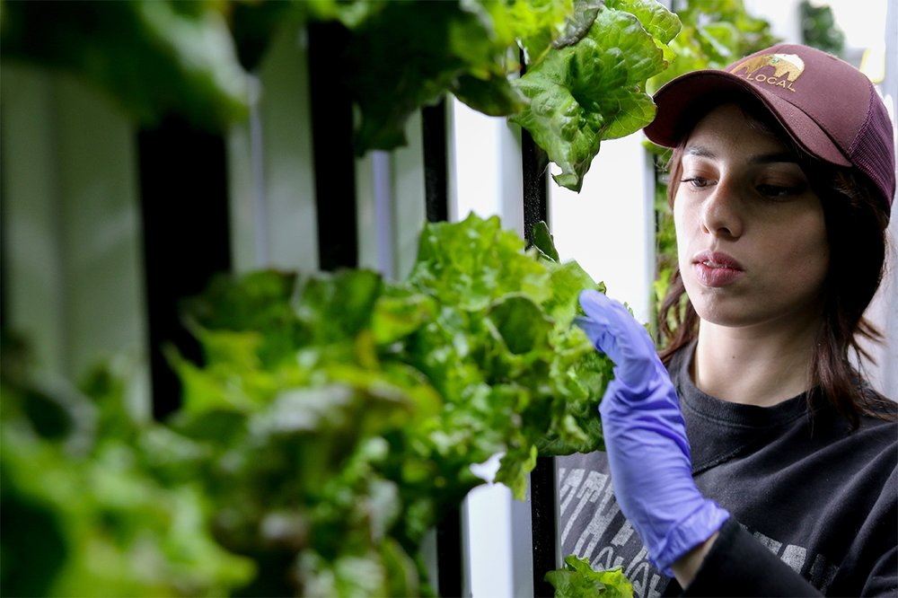 Freight Farms_Boston_Interior_Student_Harvesting_2