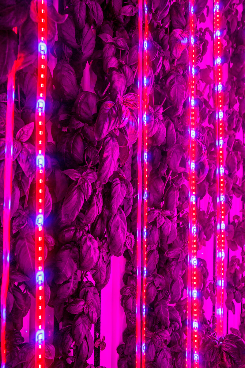 Did you know that, on top of providing plants with nourishing light, our LED lights are the main source of heat in the Leafy Green Machine!