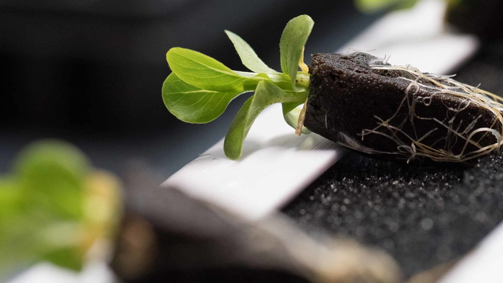 10 free seedlings to start or expand your home garden - (10 available)
