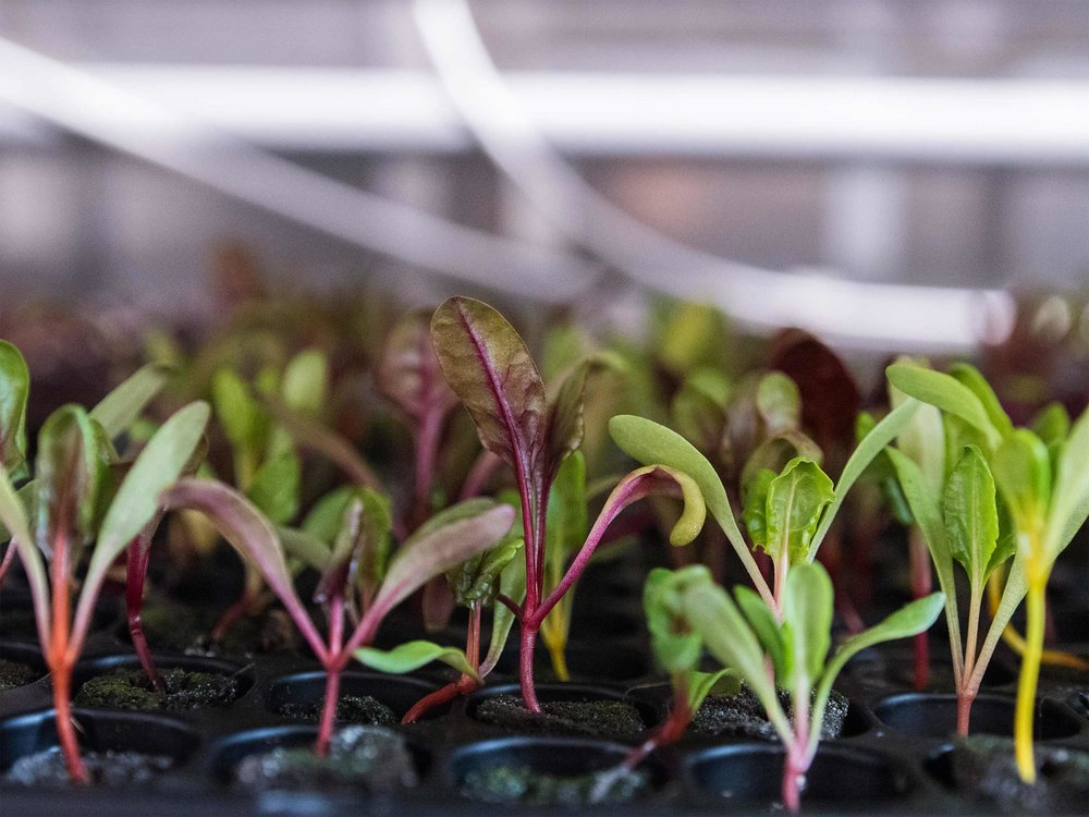 Freight Farms_Boston_Seedlings_1.jpg