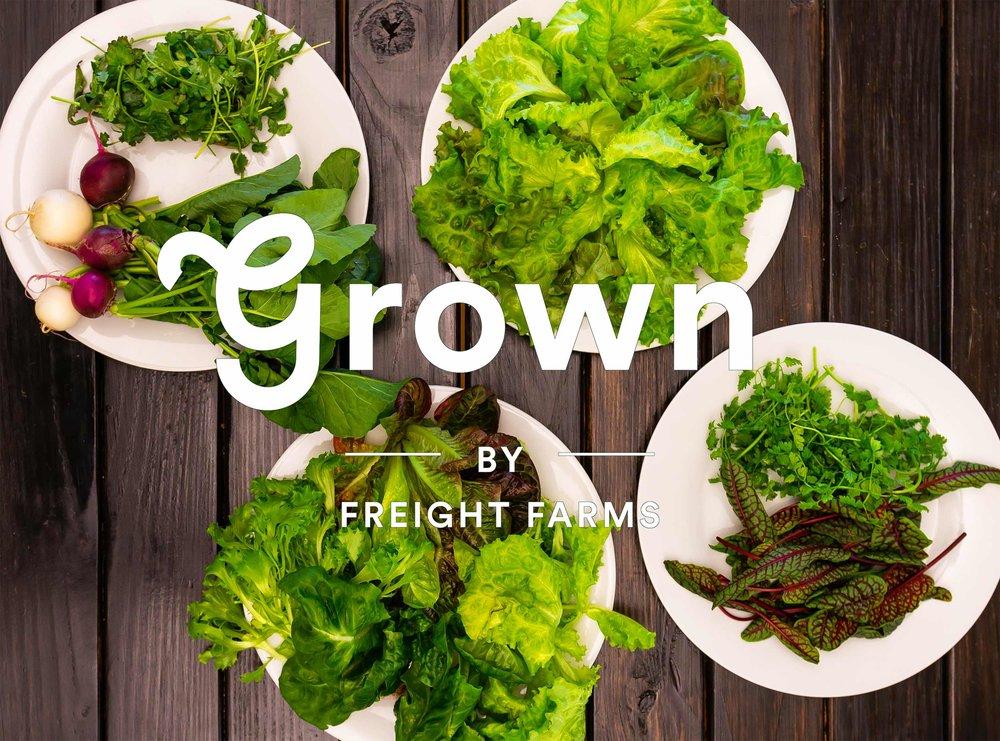 grownhero6-500kb.jpg