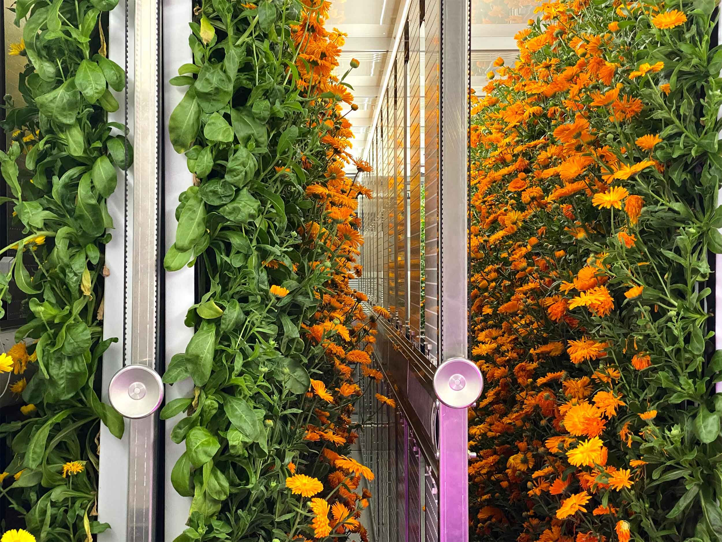 Nutrients 101: Growing Strong Hydroponic Plants — Freight Farms