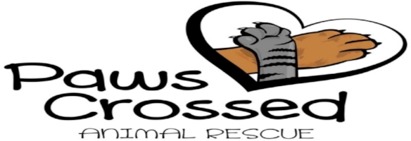 Paws-Crossed-Animal-Rescue-2.jpg