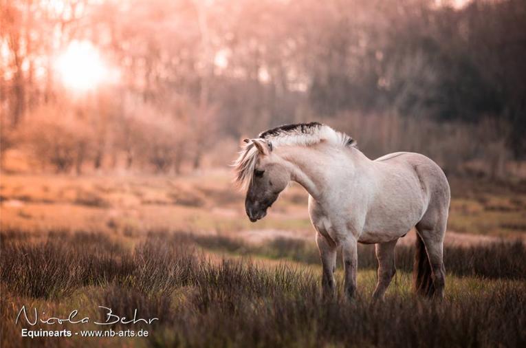 german wild horses