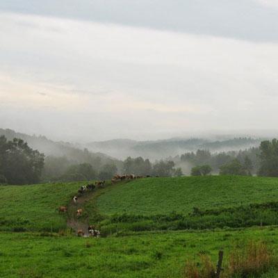 field-mist2.jpg