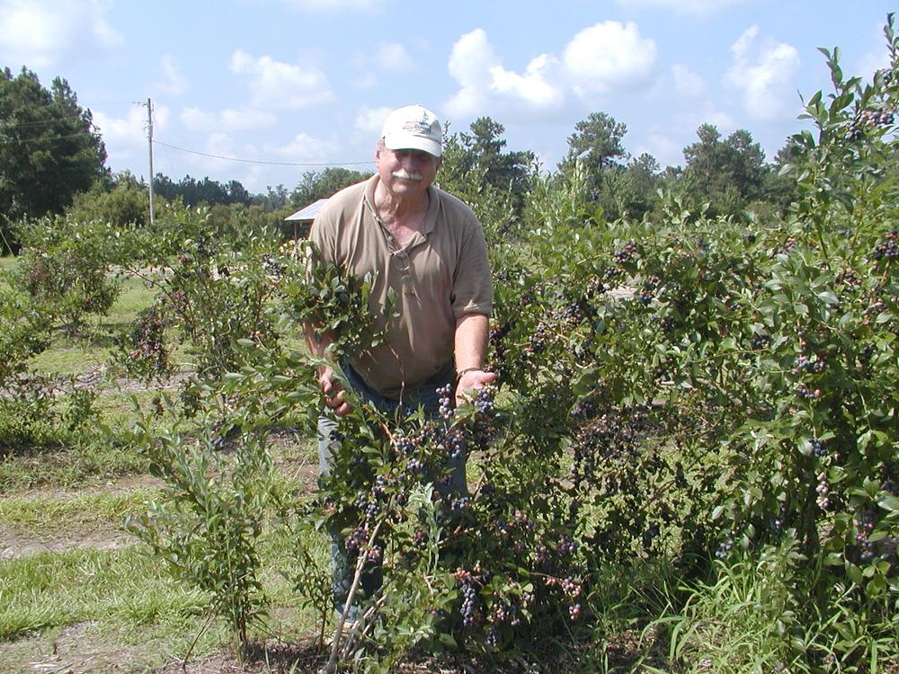 Farm 2010 014.JPG
