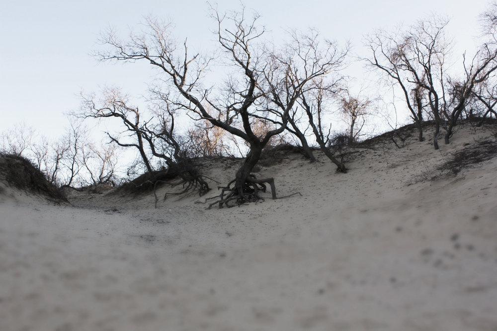 tree trips.JPG