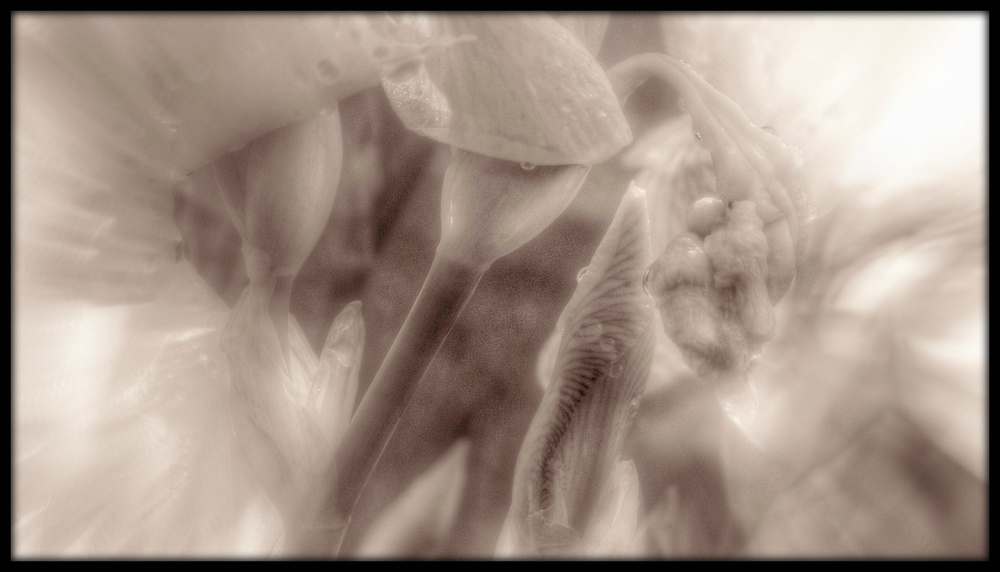 First Horizontal slideshow-033.jpg