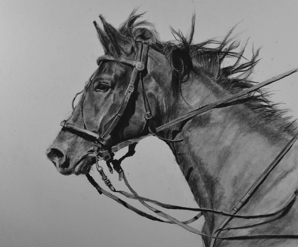 Bridled Glory - Charcoal