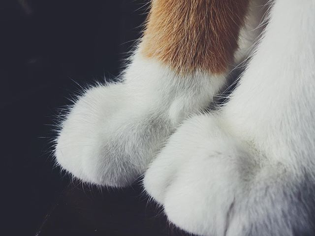 Little kitty, big paws. 🐾
