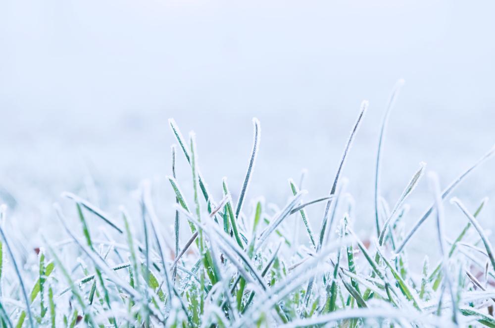 frozen_grass_211777.jpg