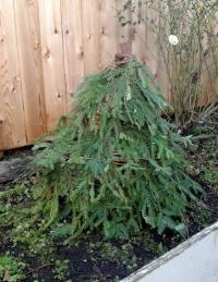Pagan Tree 2.jpg