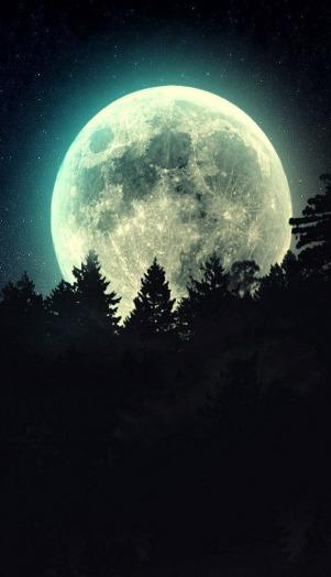 full-moon-beyond-the-pines-16545.jpg