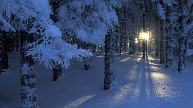 landscapes winter snow trees dawn forest sunlight season 1920x1080 wallpaper_www.wallpaperhi.com_47.jpg