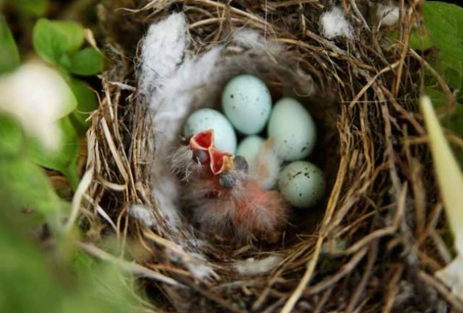 hatching-birds_640-630x425.jpg