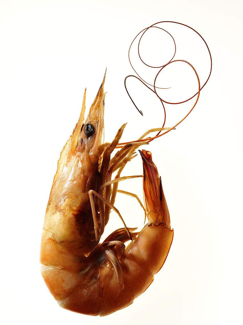 Shrimp_cooked_AF_0053_FFS.jpg