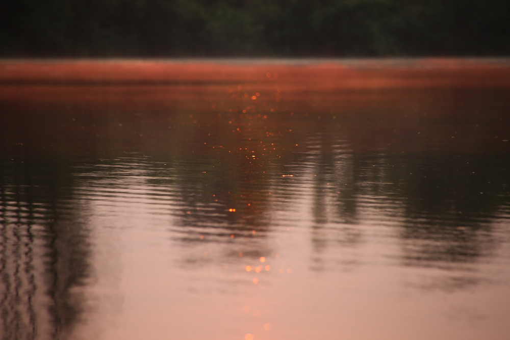 Light dances on the surface of the lake, speckles of dust or bugs glimmering in the setting sun.
