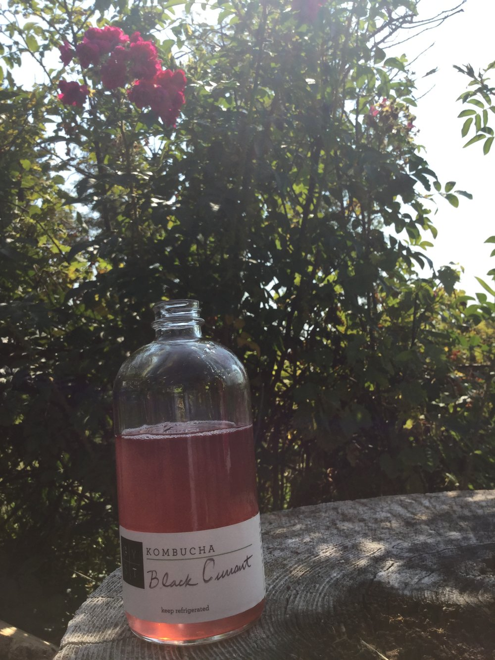 GYST black currant kombucha