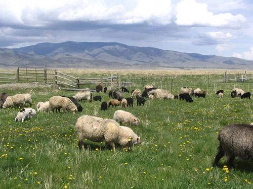 06_09_pasture_.jpg