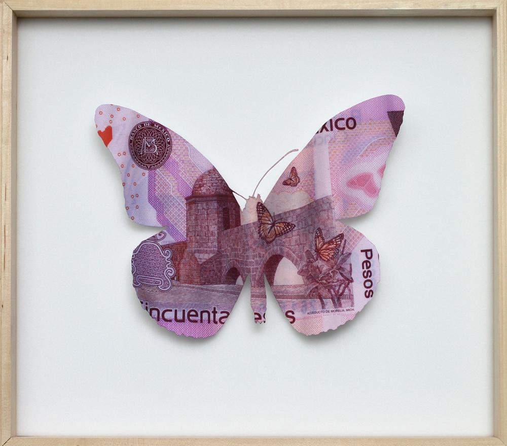 Mexico Bigbill butterfly@.jpg