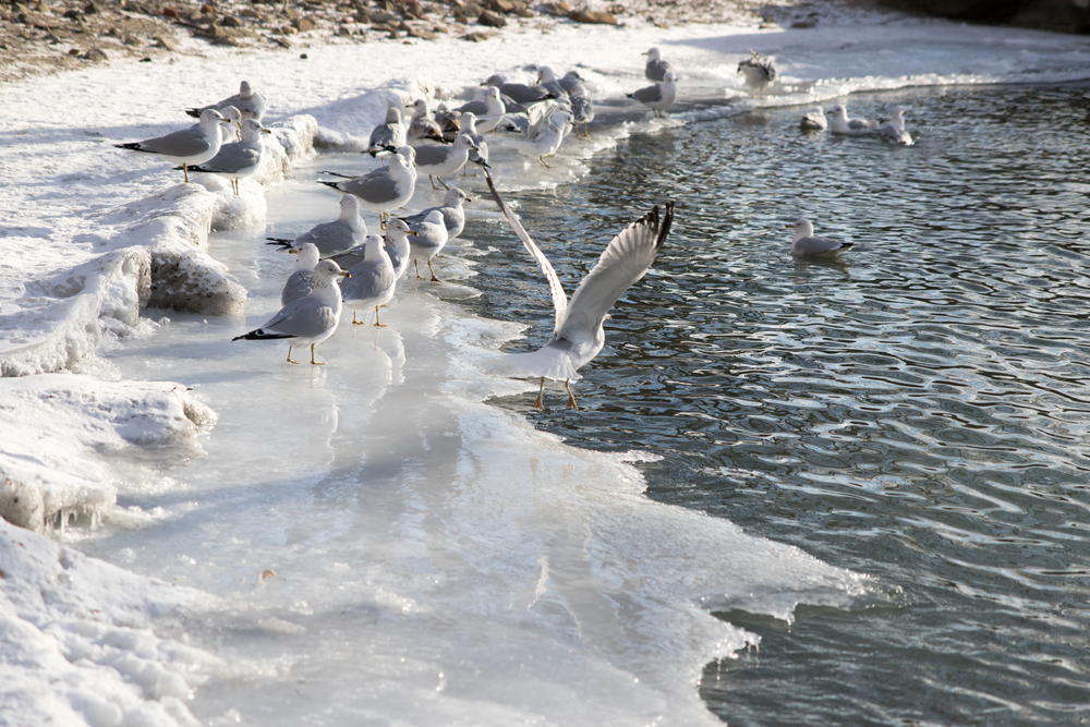 Birds on thin ice
