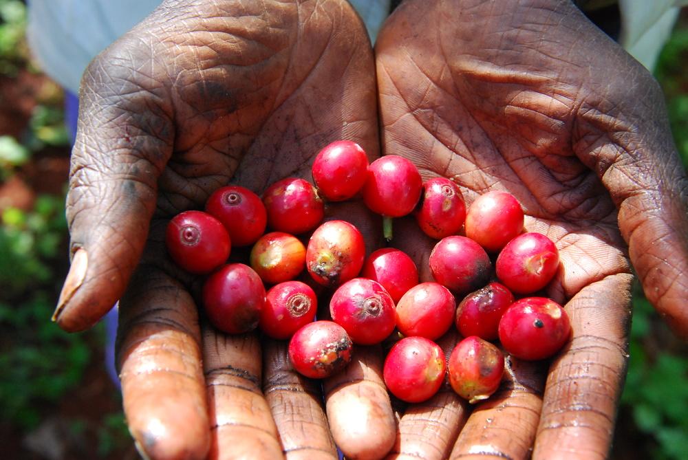 hands w berries.jpg