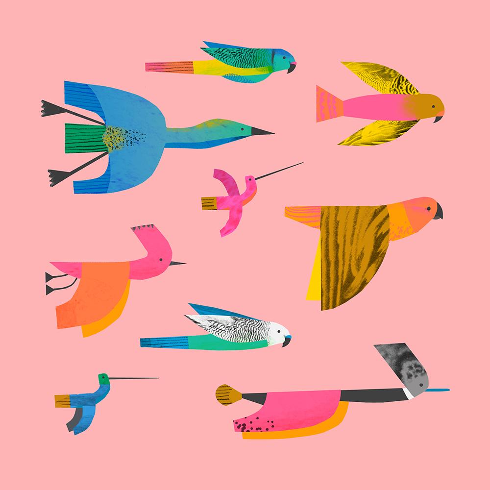 Birds by Natasha Durley
