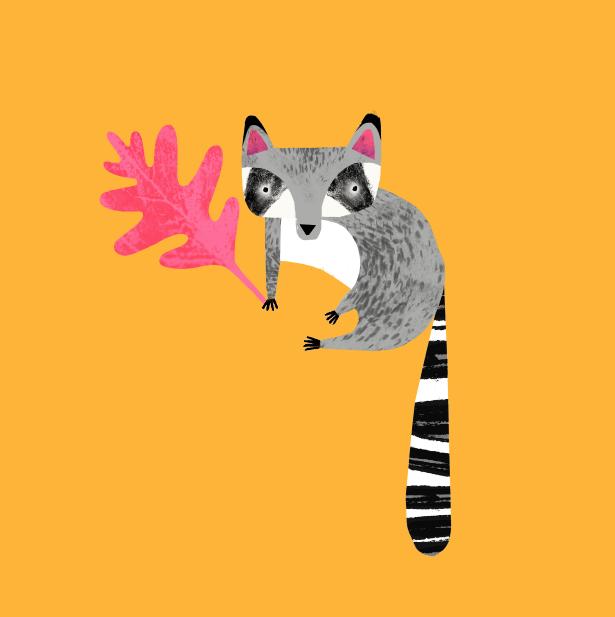 Racoon by Natasha Durley