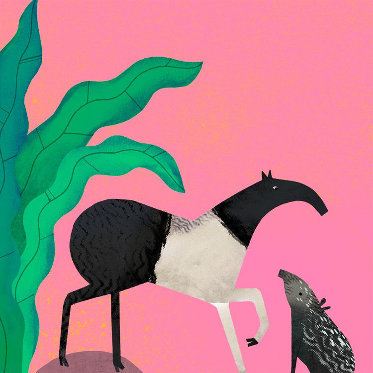 Tapir by Natasha Durley