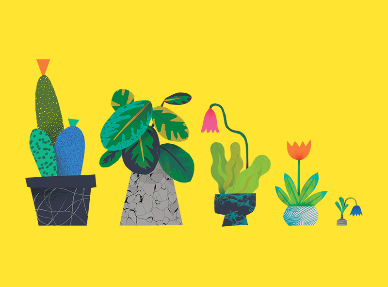 Plants by Natasha Durley