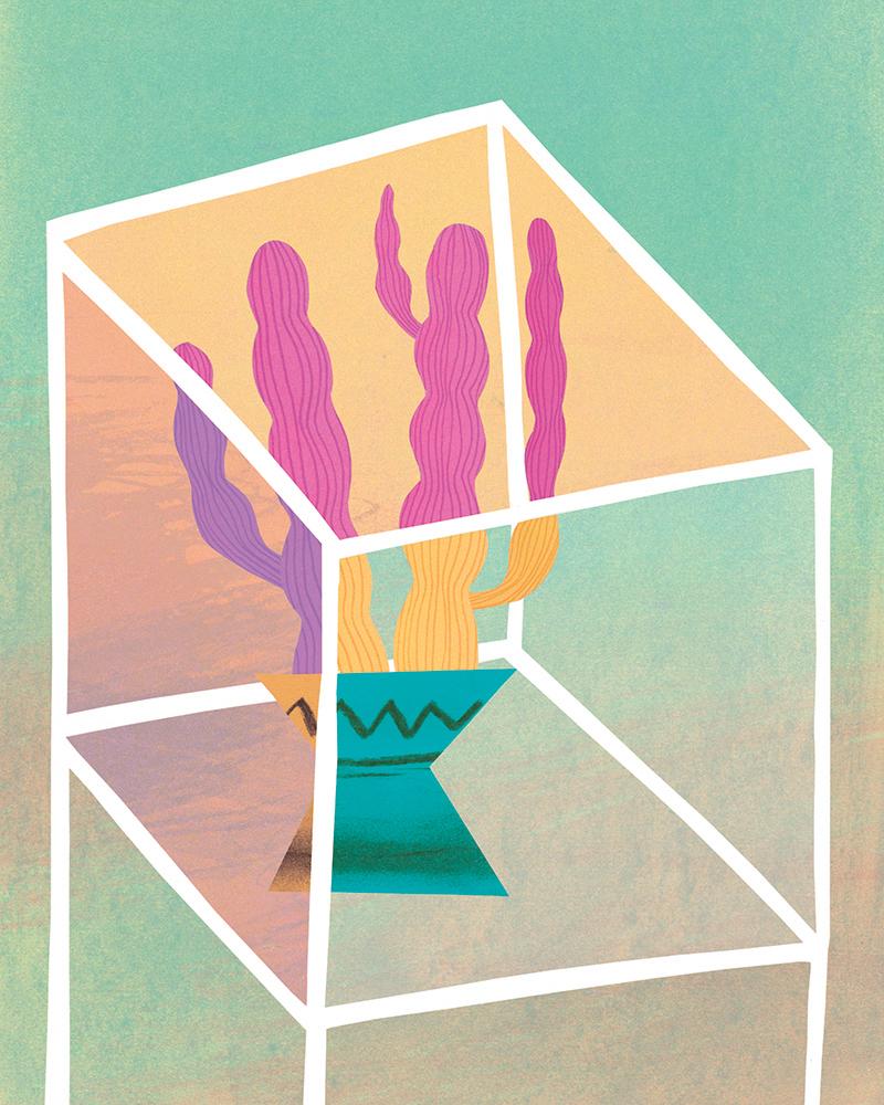 Cacti by Natasha Durley