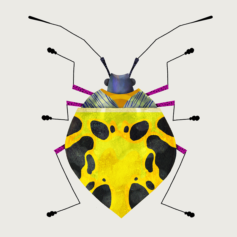 Shield Bug by Natasha Durley