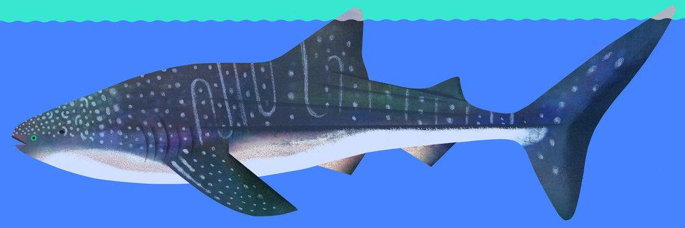 whale-shark-by-Natasha-Durley.jpg