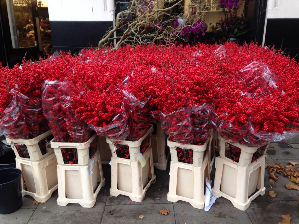 Masses of red outside the florists near the studio in Clerkenwell