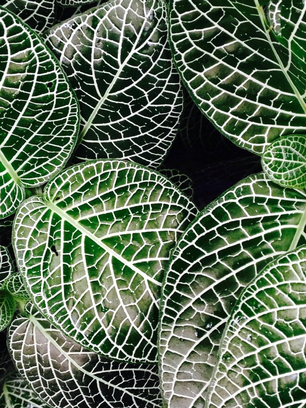 Speckled leaves.JPG