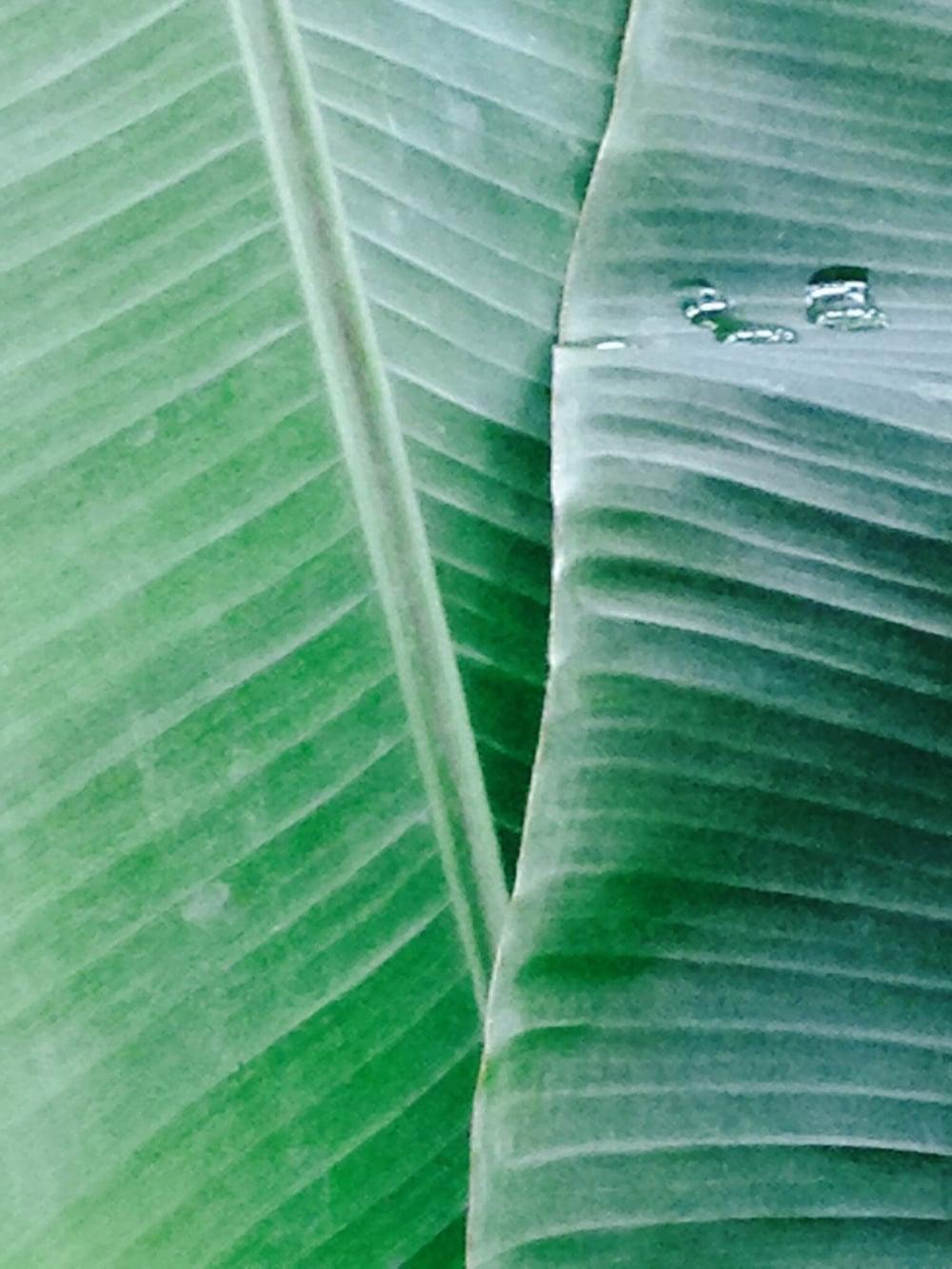 Palm fronds wide.JPG
