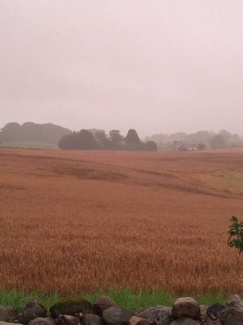 'My' field in driving rain