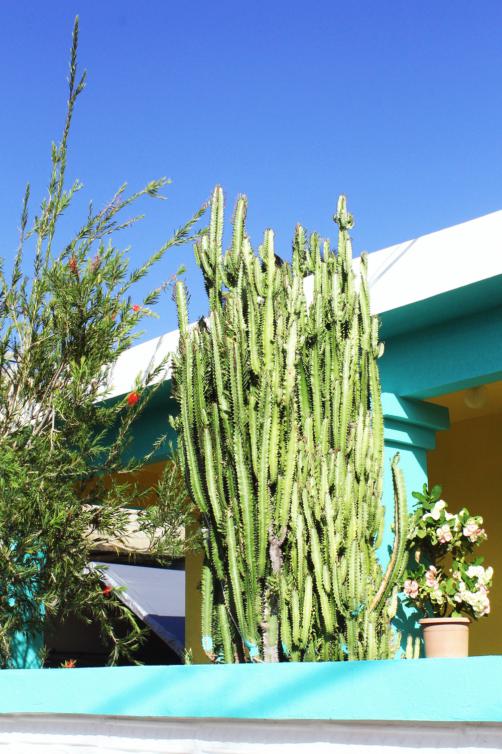 Cactuses in the Garden