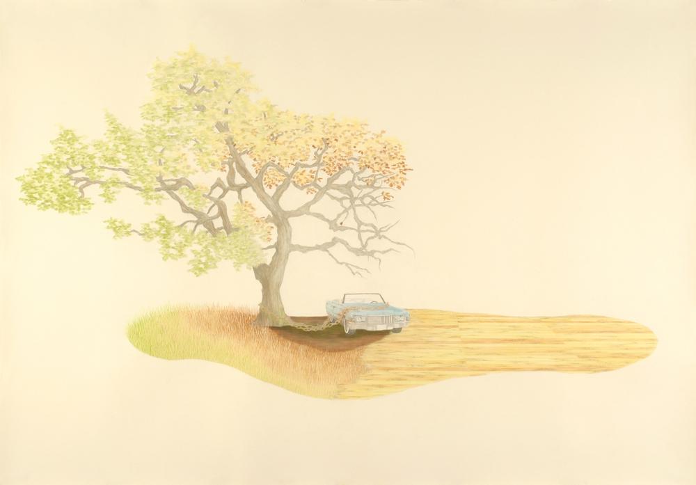Cadillac Oak